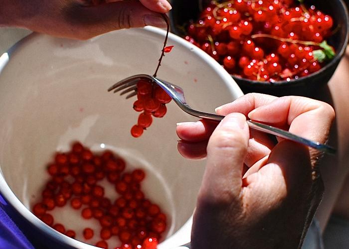 ягоды красной смородины для морса