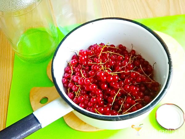 веточки красной смородины