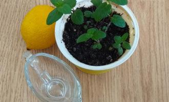 лимон и свежая мята